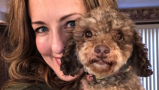 Ramzi the poodle with Jenny Cavka, of Rescue Warriors in Illinois.