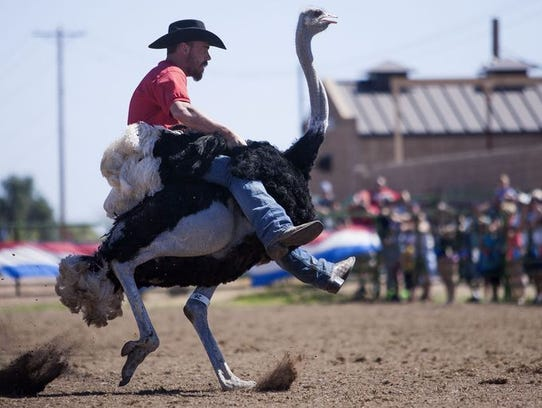 From ostriches to zebras, Chandler is celebrating 30 years of the Ostrich Festival.