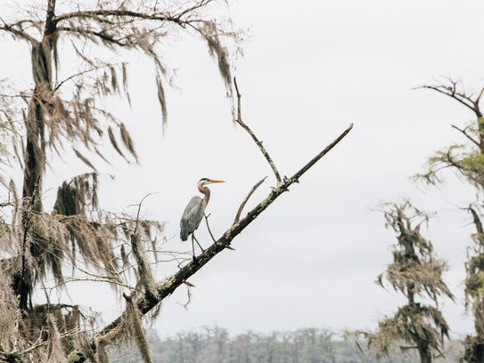 Experience the natural landscape of Acadiana on the Vermilion Voyage, a three-day guided paddle down Bayou Vermilion March 22-25.