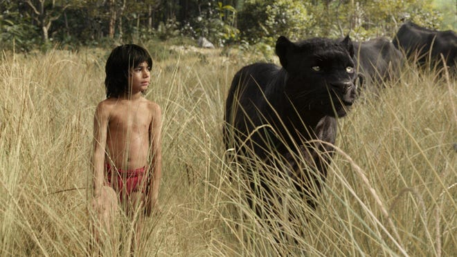 """Mowgli (Neel Sethi) and Bagheera (voice of Ben Kingsley) embark on a captivating journey in """"The Jungle Book,"""" a live-action epic adventure about Mowgli, a man-cub raised in the jungle by a family of wolves, who is forced to abandon the only home he's ever known."""