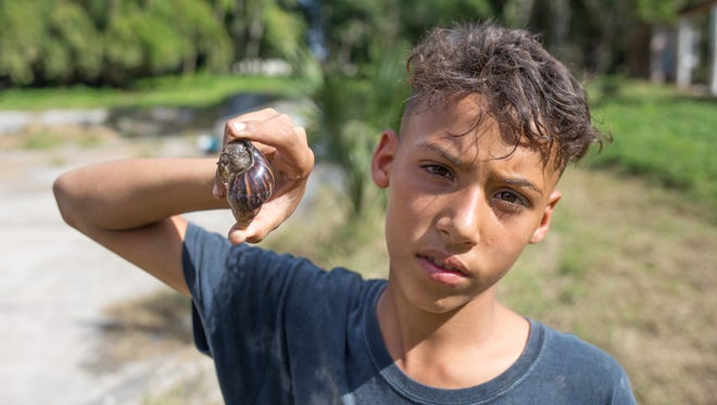 Darian Ruiz, 13, found several Giant African snails, buried at Forest Park, a recreational complex in Havana.