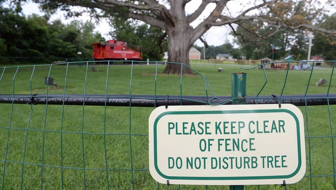 Earlier this month, a fence was put around the large oak tree in Saw Mill Park in Richland, Tuesday, Jul. 28, 2015. The tree, which is an estimated 235 years old, appears to be in poor health.