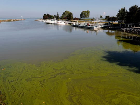 In this Sept. 15, 2017, file photo, algae floats in the water at the Maumee Bay State Park marina in Lake Erie in Oregon, Ohio. Ohio for the first time is declaring western Lake Erie impaired by the toxic algae that has fouled drinking water and closed beaches in recent years. The Ohio Environmental Protection Agency's announcement Thursday, March 22, 2018, comes amid a federal lawsuit over whether part of the shallowest of the Great Lakes should be declared impaired.