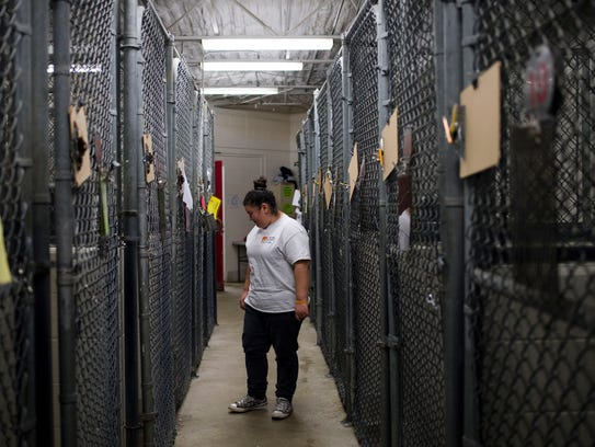 Diana Gutierrez, a volunteer, walks through the kennel