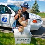 Kellye Scalf, a letter carrier with the U.S. Postal Service, fills a bin with food she collected on her route in Great Falls. Saturday's Postal Carriers Food Drive will benefit the Great Falls Food Bank.