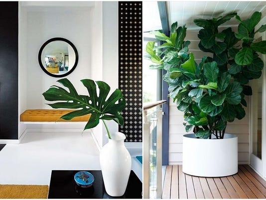 635920980981378210-1-Split-Leaf-and-Fiddle-Leaf-Fig-via-Designer-Pad-and-Gardenista.jpg