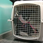 Dog in a crate.