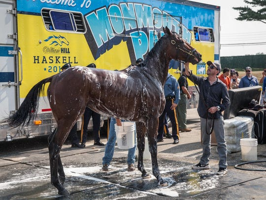 Triple Crown winner American Pharoah gets a bath after his arrival at Monmouth Park on Wednesday.