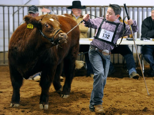 Mason Jowers, of Merkel, tries to keep his steer under control while showing it during the Taylor County Livestock Show on Wednesday, Jan. 18, 2017, at the Taylor County Expo Center.