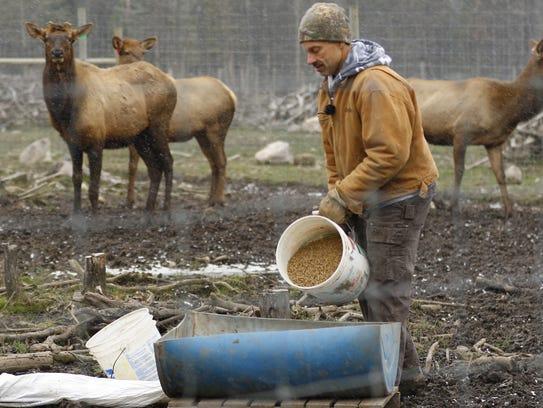 Rick Ewert feds his elk at Hemlock Hills Trophy Ranch