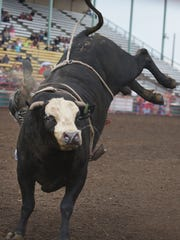 A PRCA bull rider gets bucked off of this bull at the PRCA Rodeo Monday, Aug. 13, at the Sioux Empire Fair in Sioux Falls.