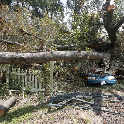 Our opinion: When tree love goes too far