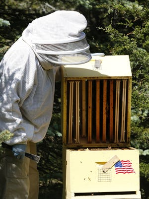 Denise Palkovich of Peebles opens one of her honey bee hives on her property Wednesday June 1, 2016.