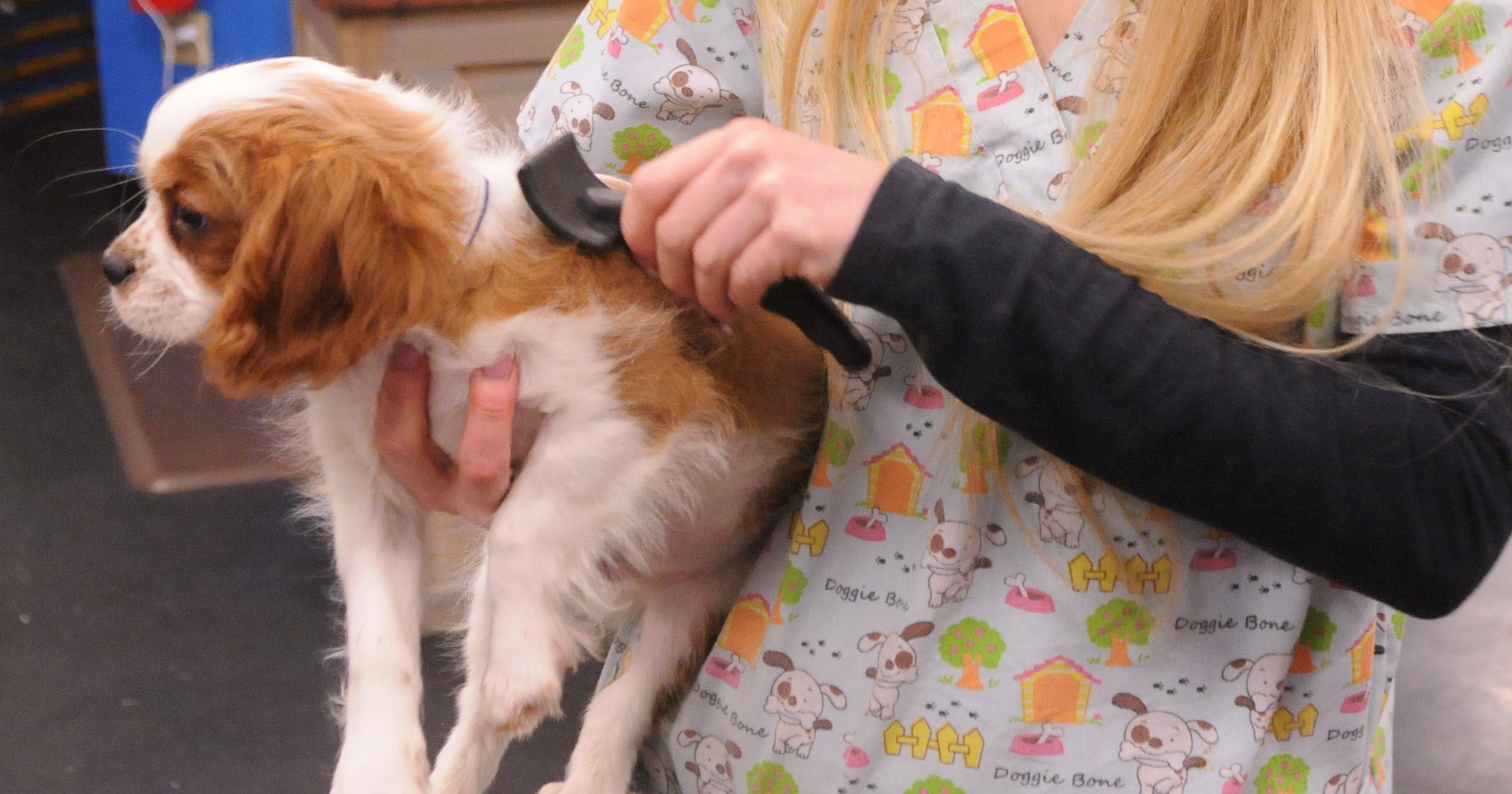 Puppy 'mills' ship to stores here in poorly regulated industry