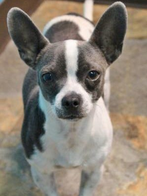 Gravy is the Current-Argus pet of the day.