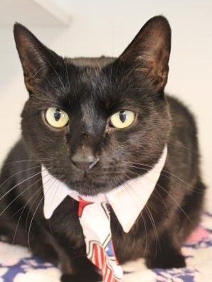 Mr T is the Current-Argus pet of the day.