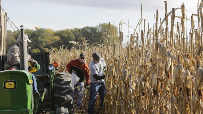 Jeremy Kane, 37, of West Lafayette, tosses corn into the tractor-pulled wagon after removing the husks. Kane participated Saturday, Oct. 17, 2015 in the Indiana State Corn Husking Contest at Prophetstown State Park. The national competition was held Sunday.
