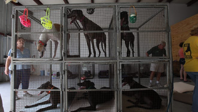 """Taking care of up to 100 retired racing greyhounds daily in their Golden Gate Estates home in Collier County had become too much for Darlene and Mark Izzo,.As president of 45 MPH Couch Potato Greyhound Adoptions, a non-profit formed in the spring of 2014, Darlene was at her wit's end.""""We were going around the clock. We had five acres,"""" she said. """"We couldn't care for that many dogs.""""In addition, the Izzos have run the operation mainly from the proceeds from their full-time jobs -- $50,000 last year Darlene Izzo estimated -- and a monthly $1,750 stipend from the Naples/Fort Myers Greyhound Track. ÒWe can't do it anymore,Ó she said."""