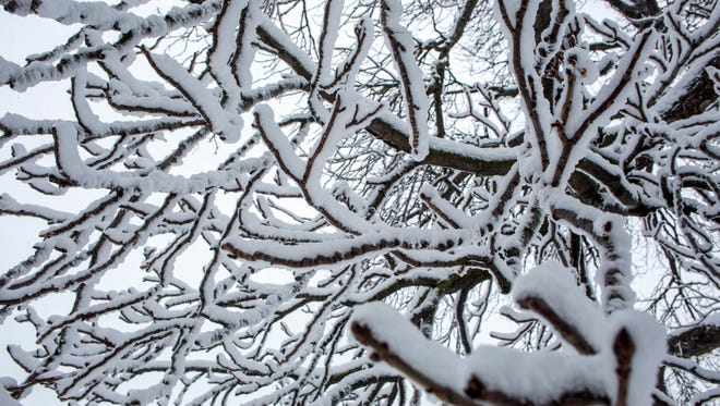 The branches of a tree are covered in snow and ice Thursday, Feb. 25, 2016 in Port Huron.