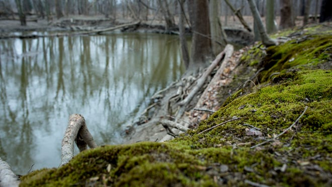 Moss grows on an embankment Wednesday, March 23, 2016 at the China Township Belle River Access Park. China Township received a $10,000 grant from the Community Foundation of St. Clair County for art and other improvements to the entryway and front of the park.