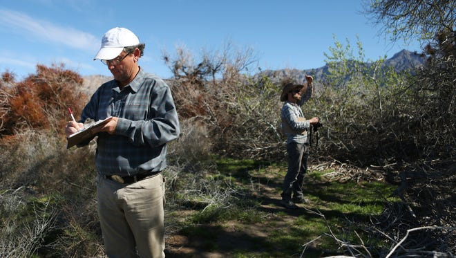 Andy Zdon takes notes on the vegetation and birds while surveying a spring with Patrick Donnelly of the Amargosa Conservancy.