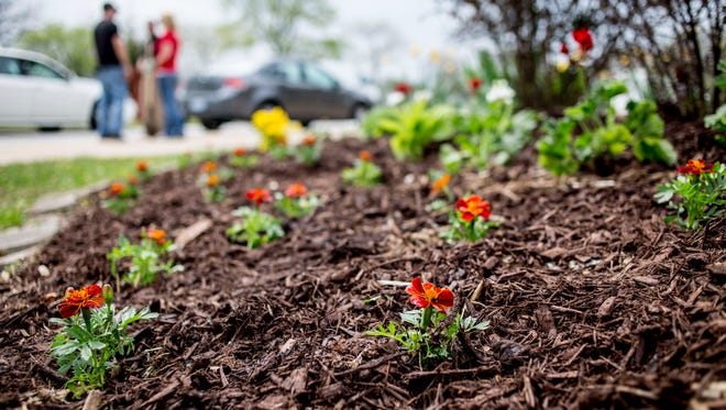 Volunteers planted flowers, trimmed shrubs and picked up trash Thursday, May 12, 2016 at Central Middle School in Port Huron.