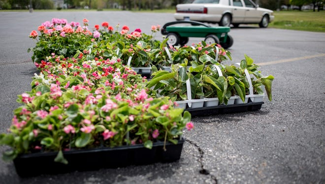 Flats of flowers are displayed during the Blue Water Garden Club's annual flower sale Friday, May 20, 2016 at Faith Lutheran Church in Port Huron. Profits from the sale go toward planting flowers at Pine Grove Park and other maintenance needs.