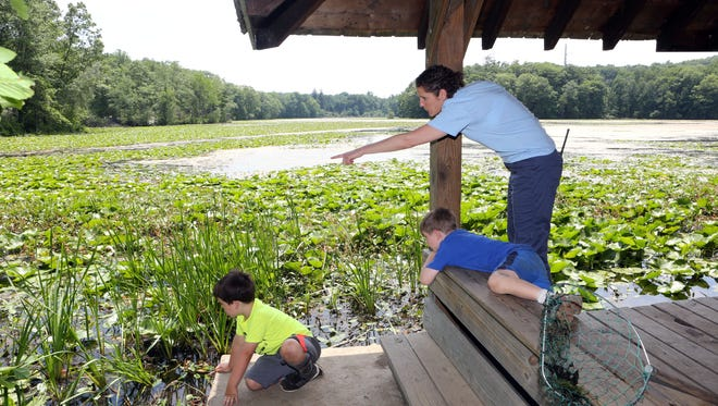 Camp Director Lisa Baugh joins Matthew Potenza, left, and Jack Snyder, both 6, as they look for frogs during Natural Science Summer Day Camp at Teatown Lake Reservation.