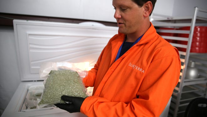 In this June 28, 2016 photo, Surterra Therapeutics Cultivation Manager Wes Conner holds a 441-gram bag of harvested marijuana buds, which according to Surterra, is the first of it's kind to be harvested in Florida under the new medical regulations passed in 2014 and 2016, on the outskirts of Tallahassee, Fla.
