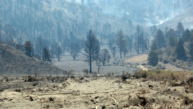 An area burned by the Blue Cut Fire just east of Wrightwood, California on Aug. 18, 2016