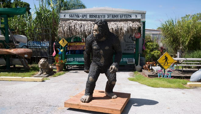 A statue of a skunk ape stands near the entrance to Everglades Adventure Tours, home of the Skunk Ape Research Headquarters, along U.S. 41 in Ochopee. The business offers guided tours of the swamp, an animal sanctuary and folklore surrounding the elusive skunk ape.