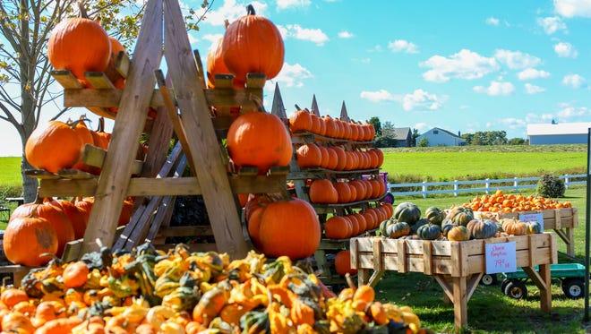 Pumpkin Fair Farmer's Market on East Hamptons NY