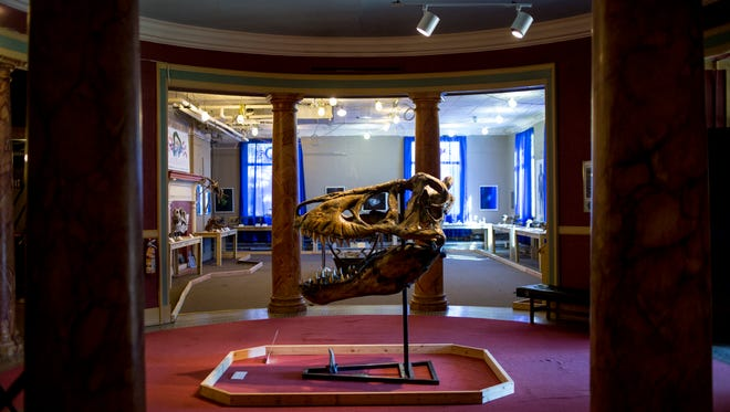 "A Tyrannosaurus skull is seen at the Port Huron Museum's new ""Paleomania"" exhibit."