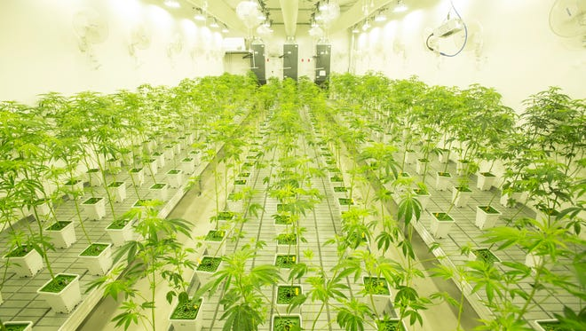 Canndescent, a newly-opened marijuana production plant in Desert Hot Springs, will be able to produce 2,500 pounds of product monthly for the medicinal market. The product could also be destined for recreational use after voters approved Proposition 64 in the November election.