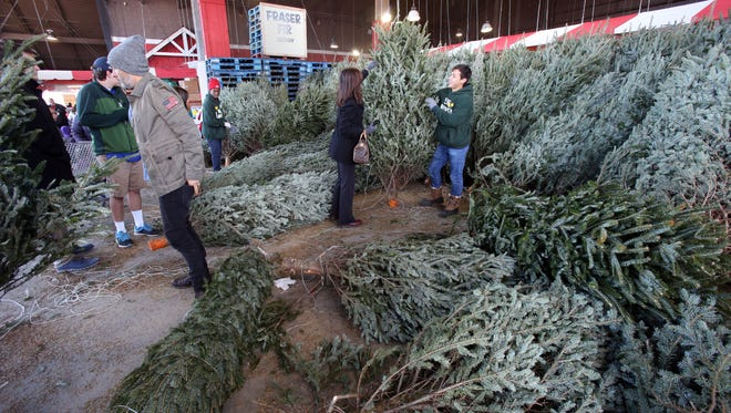 Shoppers look at the Fraser fir Christmas trees at Stew Leonard's in Yonkers, Nov. 27, 2016. Stew's sells about 17,000 trees each year of the Balsam, Fraser and Douglas varieties.