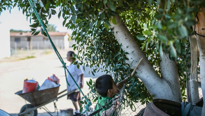 A boy plays in a tree outside his trailer home on Friday,  November 18, 2016 in Thermal.