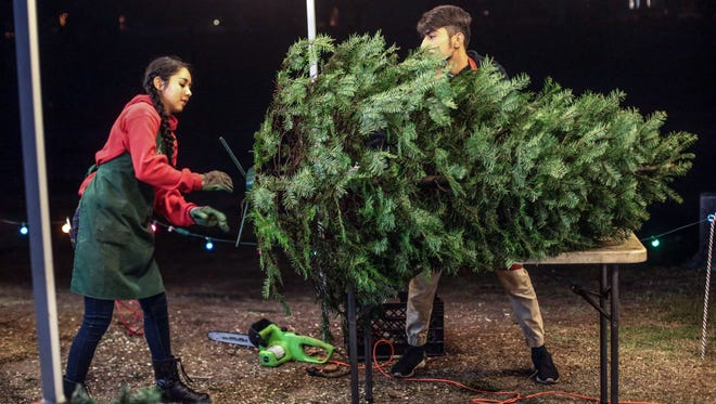 Palm Springs High School band members  Melina Solis, 16, and Kevin Forero, 16, ready a tree for transport at PS Christmas Trees on Saturday, December 10, 2016 at the parking lot of Palm Springs High. The lot is owned by Todd Schuch of Cathedral City and a part of the proceeds will be given to the Palm Springs High School band.