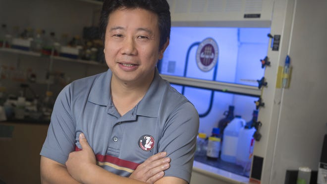 Hengli Tang, a biology professor at FSU with an area of expertise in molecular and cell biology, is the lead author on a groundbreaking study of the Zika virus and brain development. Hengli Tang, a biology professor at FSU with an area of expertise in molecular and cell biology is the lead author on a groundbreaking study of the Zika virus and brain development.