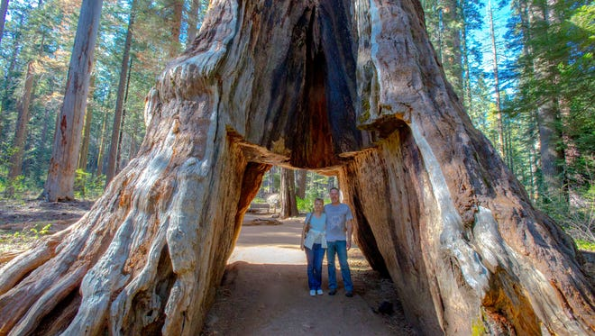"""In this May 2015 photo provided by Michael Brown, John and Lesley Ripper pose in the Pioneer Cabin tunnel tree, a giant, centuries-old sequoia that had a tunnel carved into it in the 1880s, during a visit to Calaveras Big Trees State Park near Arnold, Calif., in the Sierra Nevada. The tree came crashing down on Sunday, Jan. 8, 2017, during a massive storm. """"I was blown away,"""" said John Ripper, a 55-year-old printer in Northville, Michigan. """"I've traveled to 70 countries, But that particular tree and being able to walk underneath it and touch it was quite a memorable moment and something I won't soon forget."""" (Michael Brown via AP)"""