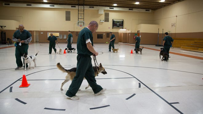 Inmate handlers take their dogs through drills in the gym of the Southern New Mexico Correctional Facility, Thursday, January 19, 2017. The PAWs program pairs inmates with rescued dogs.