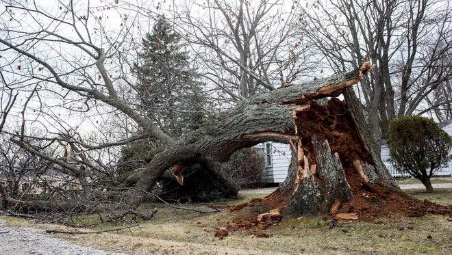 """A large tree is seen fallen at Krafft Road and Pine Grove Avenue Thursday, March 9, 2017 in Fort Gratiot. About 29,000 are without power in the Blue Water Area, and more than 700,000 lost power in southeastern Michigan in what DTE is calling the """"largest weather event in DTE history."""""""
