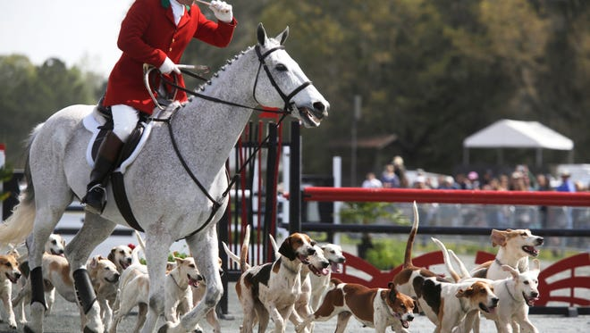 Every year the Red Hills Horse Trials held at Elinor Klapp-Phipps Park brings out thousands of spectators from the Tallahassee community --on two legs and four! Here's a look at some of 2017's Canine attendees.