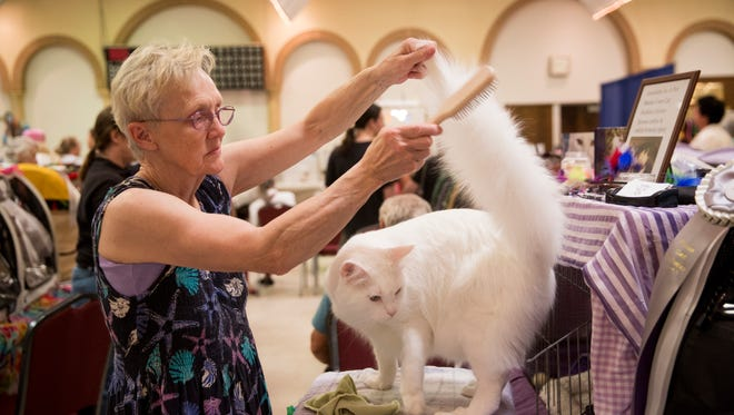 Janet Marr of Rising Sun, Indiana, combs her Maine Coon, Tuscany, prior to showing him at the 2017 CFA Allbreed Cat Show in Fort Myers.