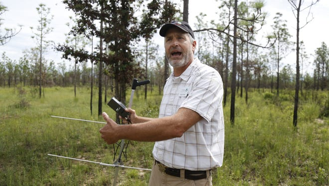 The Nature Conservancy's North Florida Program Manager David Printiss demonstrates the radio telemetry equipment researchers will be using to track Eastern Indigo Snakes released Monday at Apalachicola Bluffs and Ravines Park Monday as part of conservation efforts.