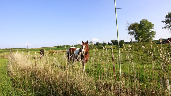Horses walk up to the camera.