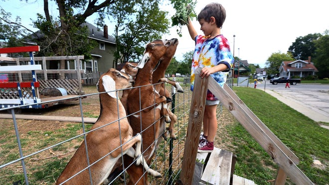 In a Saturday, Sept. 2, 2017 photo,Rudi Petruziello, 6, feeds a few of the goats during a tour of Glass City Goat Gals, which is part of the Ohio Sustainable Farm Tour and Workshop Series in Toledo, Ohio. Glass City Goat Gals owner Liz Harris has spent seven years transforming an area that once consisted of 15 abandoned homes — before the Lucas County Land Bank tore them down — into an urban farm on Mentor Drive promoting wellness, healthy eating, and environmental sustainability.