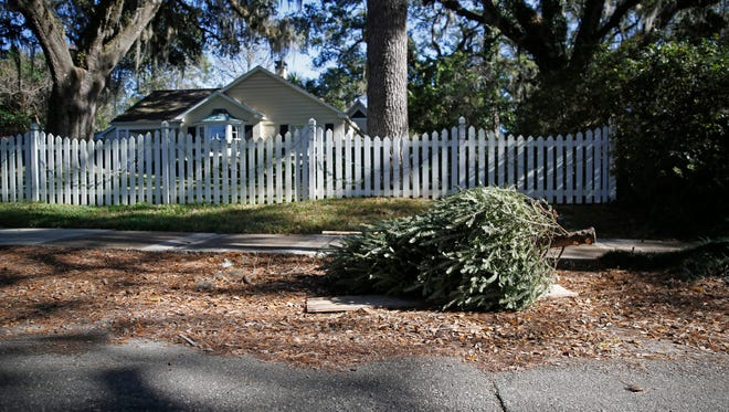 """Nothing says """"Christmas is over"""" like a Christmas tree on the trash pile. Stripped of their tinsel and ornaments, these trees wait  Tuesday on the side of Lee Road for large waste pickup day."""