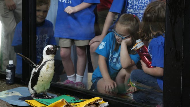 African penguin Gypsy does a painting demonstration for guests on World Penguin Day on April 25, 2017.