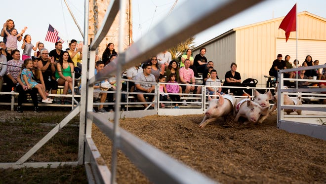 In a flurry of mulch and dust five young pigs, with The Show-me Swine Racers, round the first turn in a heated race during the Collier County Fair Monday, March 19, 2018 in Naples. Sunday, March 25, 2018 is the last day of the fair.