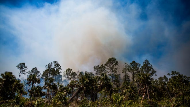 The Flag Pond Fire continues to burn on the west side of Miller Boulevard in Picayune Strand State Forest on Friday, March 23, 2018. Fire vehicles standby for flareups.